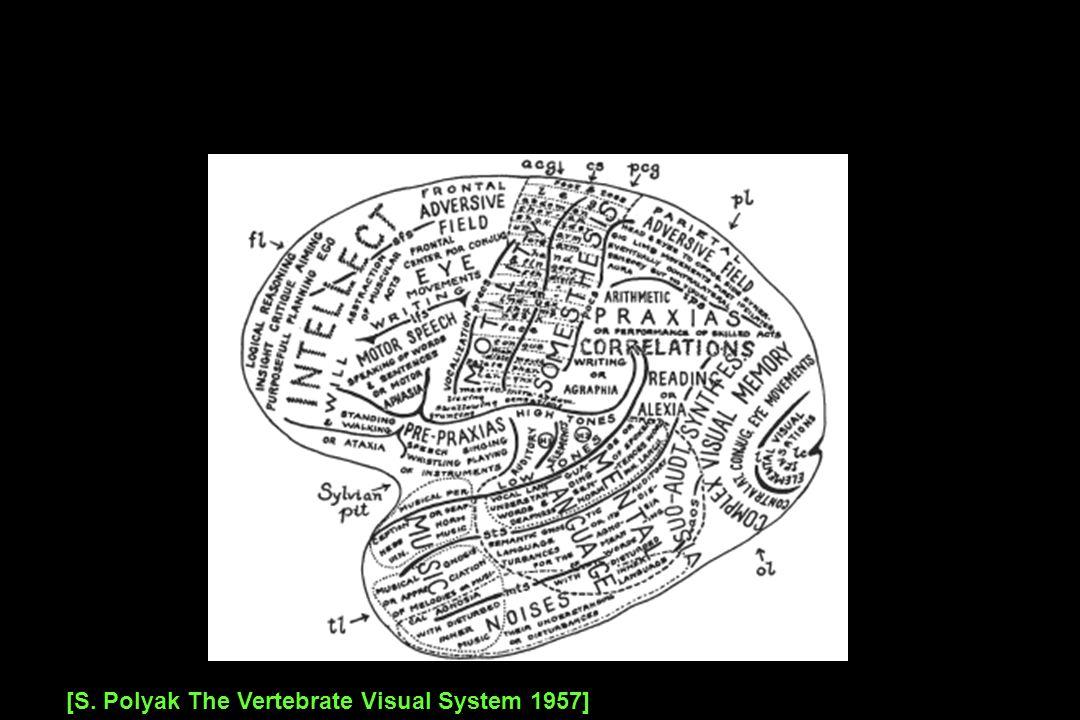[S. Polyak The Vertebrate Visual System 1957]